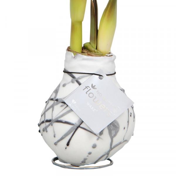 Wax Amaryllis Vermeer Blanc