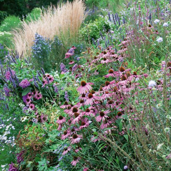 Borderpakket met bloeiende tuinplanten in zachte tinten