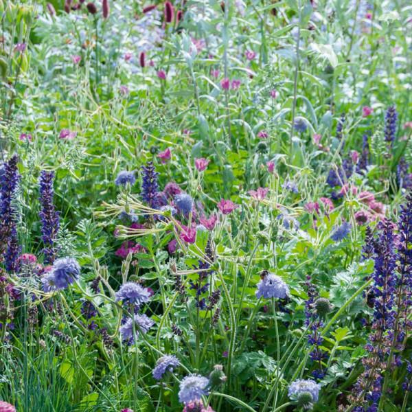 Collection de bordure pour un jardin d'abeilles