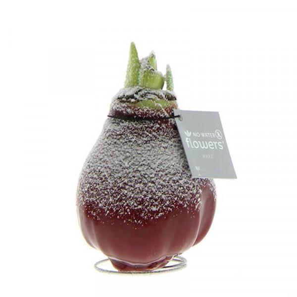 Wax Amaryllis Bordeaux avec Neige