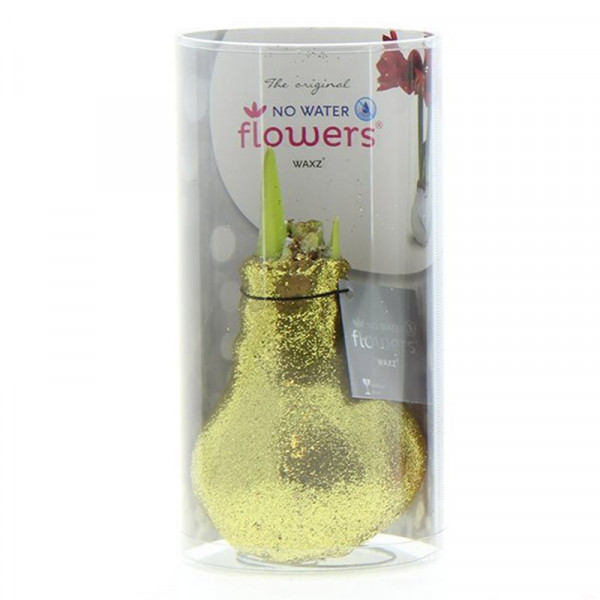 Wax Amaryllis Glitterz d'Or en tube