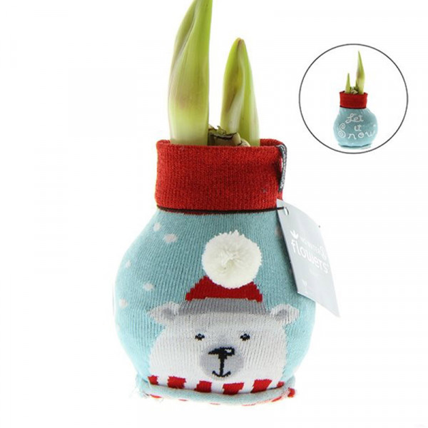 Wax Amaryllis Fashionz Xmas Bear