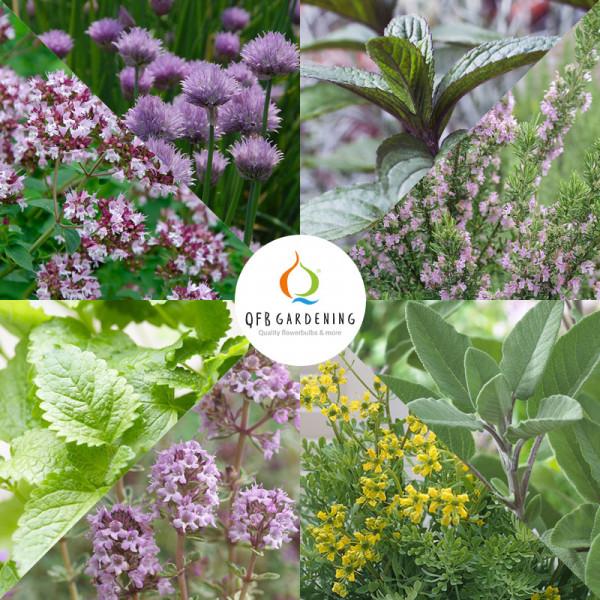 Collection de bordure Herbes à 8