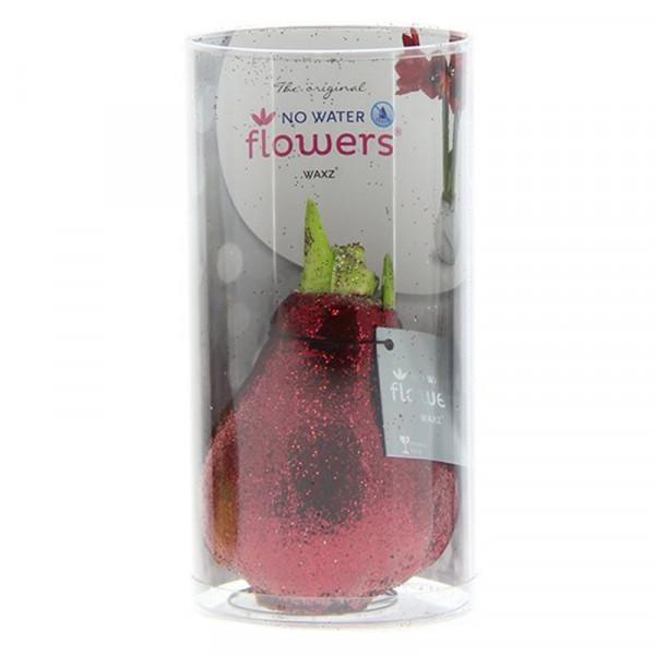 Wax Amaryllis Glitterz Rouge en tube