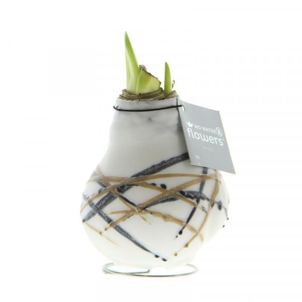 Wax Amaryllis Rembrandt Blanc