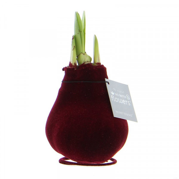 Wax Amaryllis Velvet Touchz Bordeaux