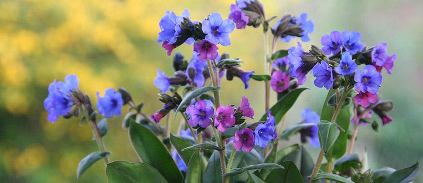 Plantes pérennes spécial
