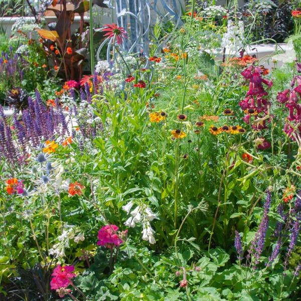 Collection de bordure pour un jardin d'papillons